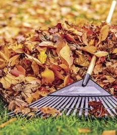 Fall Leaf Collection Begins November 5